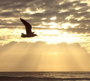 about-gratitude-seagull-over-sunrise-flying